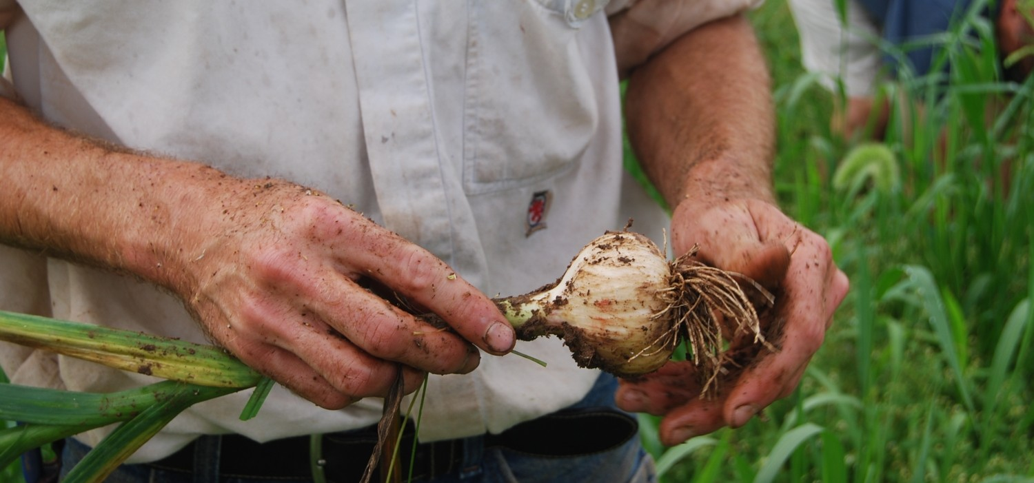 garlic in hand scaled down