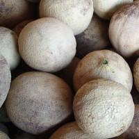 Cantaloupe (what we grow)