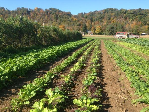 $12 Arugula Salad Field Bed