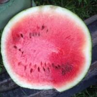 Watermelon-What We Grow