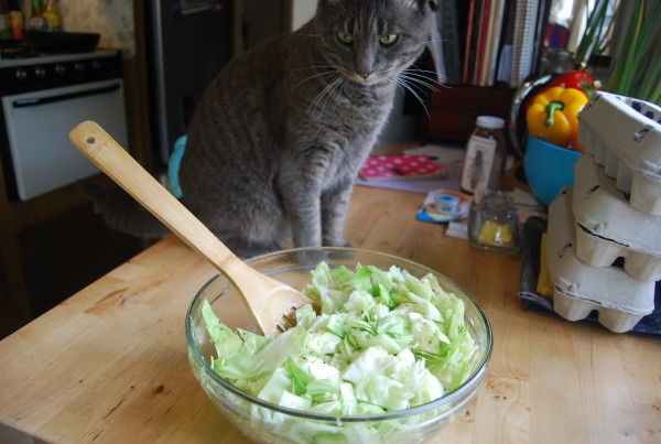 Cabbage and Cat