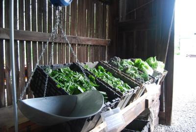 Produce scale