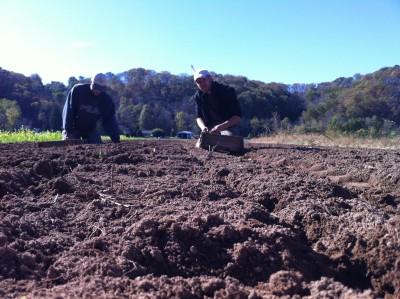 October Garlic Planting